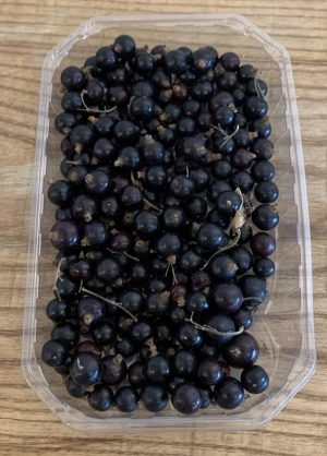 BLACKCURRANT PUNNET